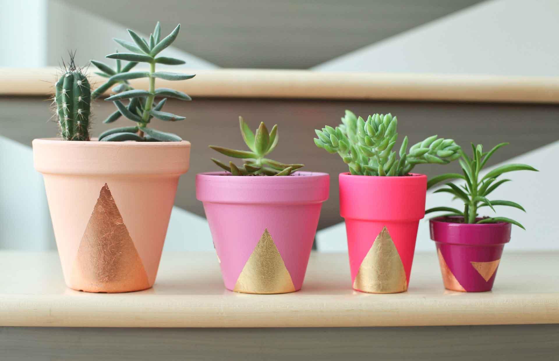 Succulent Pots Boom