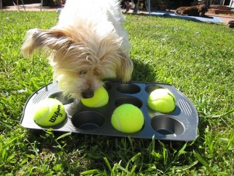 35 awesome things you can make for your pet list inspired