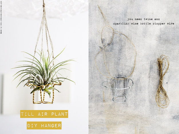 50 elegant diy ways to show off your plants page 9 list inspired - Elegant ways to display air plants in your home ...