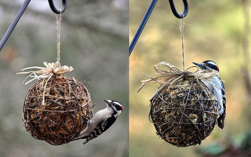 7 DIY reciclado alimentadores de aves - Earth911.com