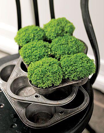 Muffin Tin Planters