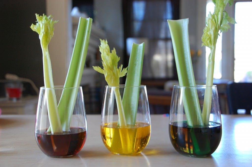 12 Celery Science Experiment