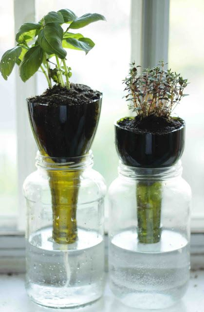 Indoor Herb Garden Ideas 12 indoor herb garden ideas grow your own food right in the comfort of your 5 Self Watering Glass Planters