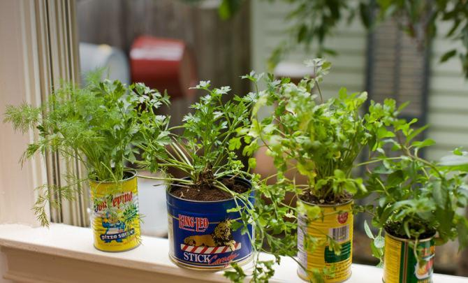 10 Tin Can Planters
