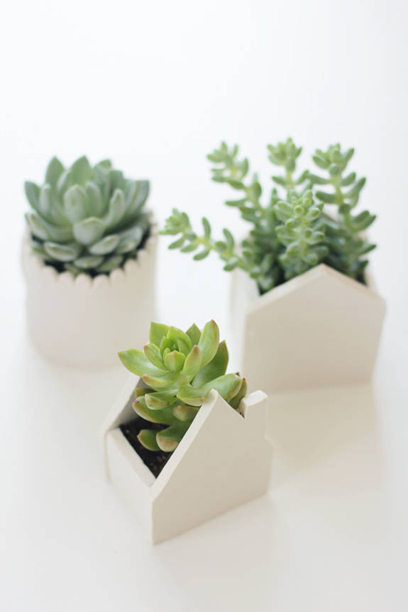 Succulent Clay Pot