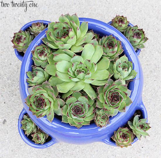 35 cool green living succulent diy project ideas page 2 - Cool succulent plants ...