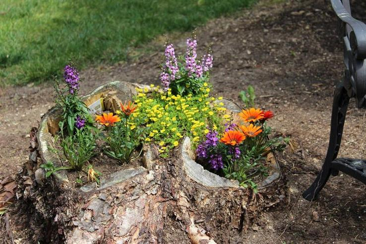 Tree Stumps into Planters