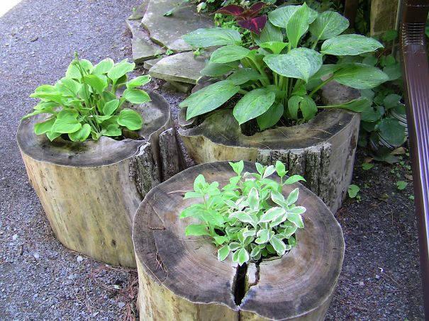 Elegance Container Gardening