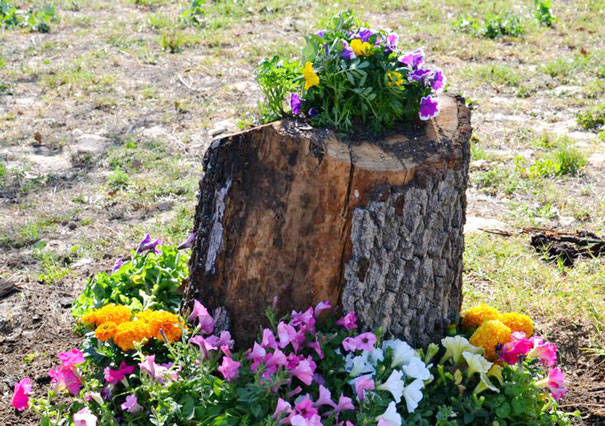 Transform Tree Stump to Unique Planters