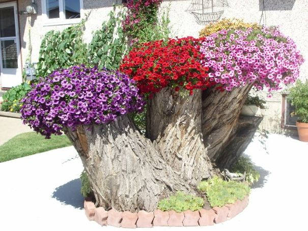 Pansy and Petunia Plant Power