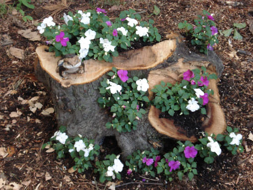 4 Tree Stump As Natural Planters
