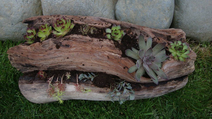 Drift Wood Living Planter