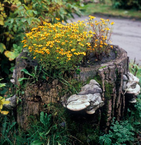Tree Stump Planter For Flowers