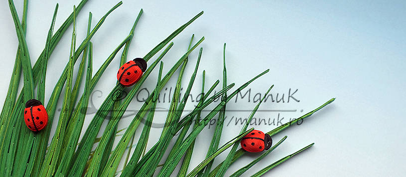 Ladybugs in the Grass
