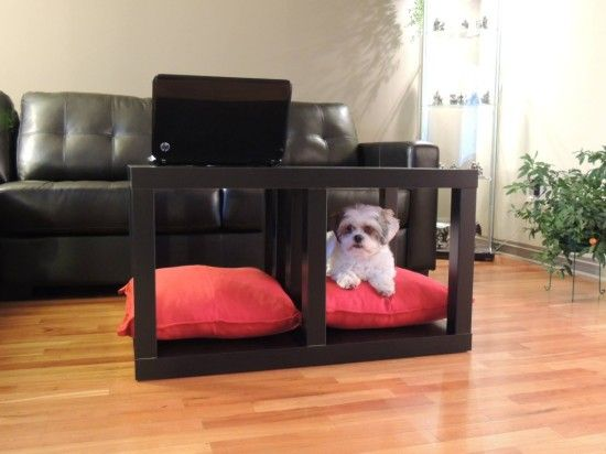 Coffee Table and Dog Bed