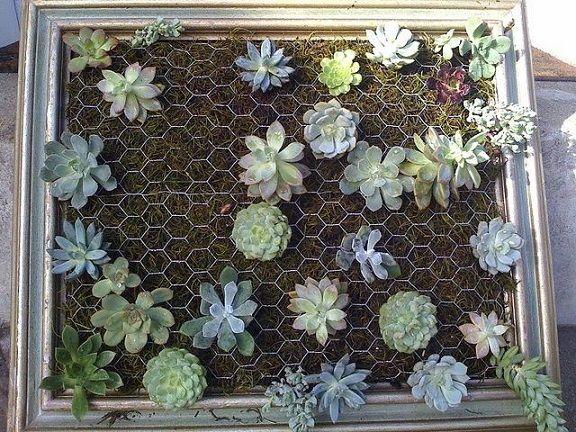 Framed Vertical Succulent Garden