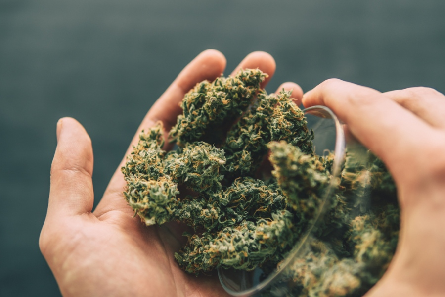 Buying Hemp CBD Flower: Meet The OG Kush